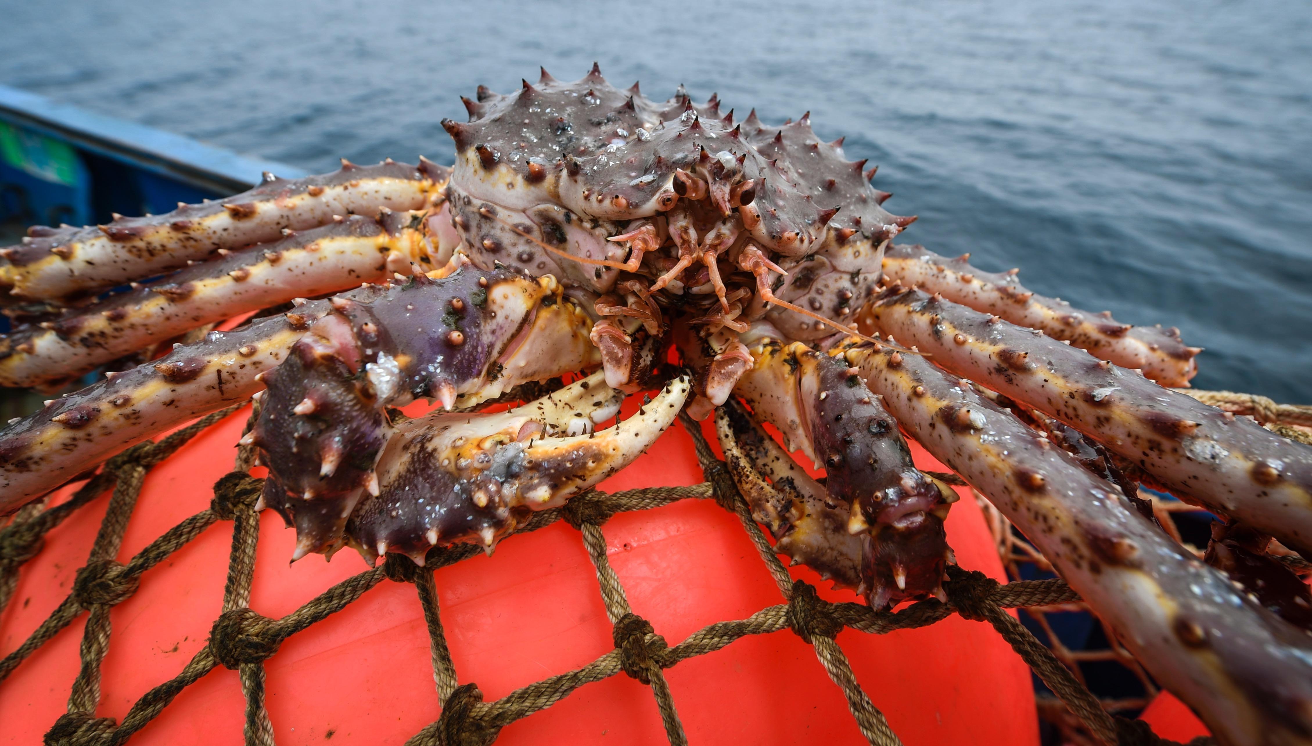 Приморские пограничники задержали японское судно с 7,5т живого краба на 39 млн рублей